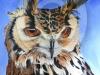 indian-eagle-owl
